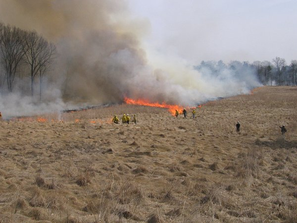 A prescribed burn in progress on a conservation property in New Jersey.  Photo (c) 2009 Matthew Sarver