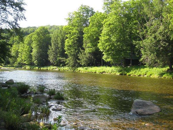 This quiet stretch of river was a favored spot for Common Merganser fishing lessons.  The cabin is visible on the far side of the river among the trees.  Photo (c) 2009 Matthew Sarver